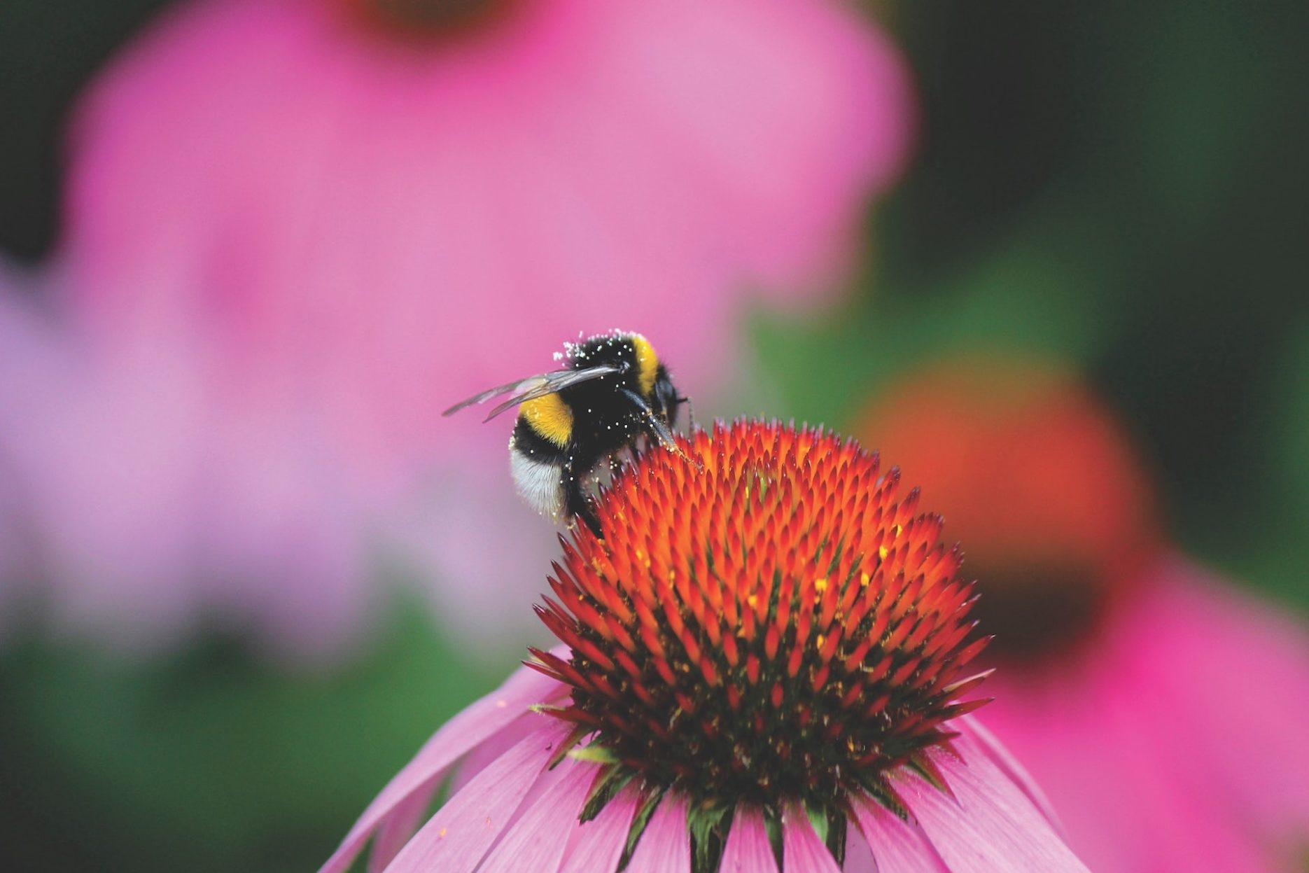 How can an energy business protect bees? – Support the Goals